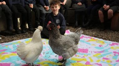 Chickens by Geraldine Heaney