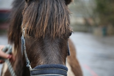 Horse by Geraldine Heaney